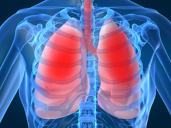 Nhân ngày Thế giới phòng chống lao, bàn về công dụng của Đông trùng hạ thảo đối với lá phổi
