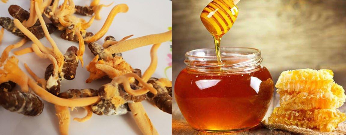 Tác dụng của đông trùng hạ thảo ngâm mật ong? Cách ngâm như thế nào?