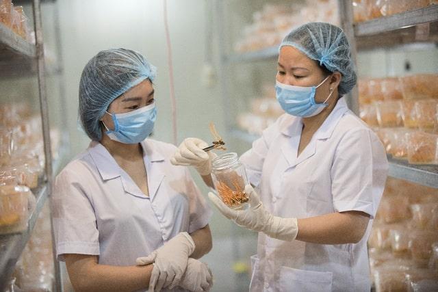 Tìm hiểu quy trình sản xuất đông trùng hạ thảo đạt tiêu chuẩn GACP-WHO của Dược Thảo Thiên Phúc