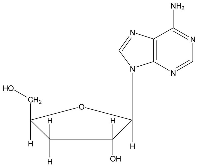 Cấu tạo hóa học của Cordycepin